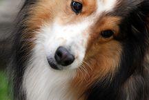 DOG,DOGS,DOGGIE / by Pamela Vanjackson Piggee