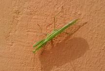 insectos / http://www.diariodeunzocato.blogspot.com.es/