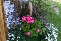 landscaping loves ideas and tips