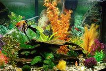 Aquarium Ideas and Fish