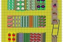 veggie gardens / by Bonnie Biggs