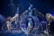 """Cirque Arlette GRUSS """" LES ARTISTES 2013 """"  / En espérant que ce voyage à travers les richesses Photographiques et le talent de notre créateur d'émotion F.Vallon vous laisse un souvenir inoubliable dans la tête et dans le cœur des petits … Mais aussi des grands !  Cirque Arlette Gruss"""