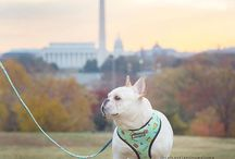 Dog Friendly Washington, D.C. / I hate leaving my dogs at home, here are some places where your furry friends can join you on your outings.