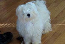 Dogs like mine. Love my Korky / by Deb Davis
