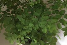 430 groen