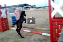 Coole Pferde
