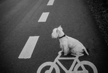 Dogs / Photography