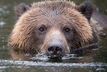 Bjørner