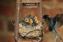birds nests in unusual places! / by Penelope Bianchi