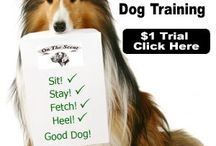 Dog Training / All about Dogs, Training Dogs, How to take care of your DOG :)