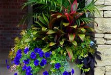 Garden Greats / Container Gardening