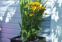 Ecosure Garden Planters
