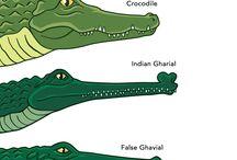Tamigator