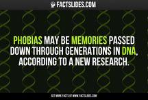 FACTSlides