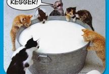 I Luv kitties!!!