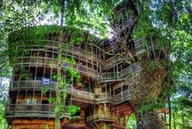 Fab Treehouses / I'd love a treehouse but unfortunately don't have the room in our garden (or any trees which defeats the object really!).  I love watching Treehouse Masters and Redwood Kings :-)