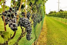 Cape May - Wineries