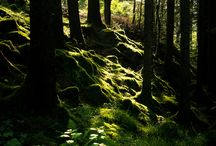 Forest...my souls resting place