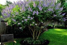 Садоводство / Всё о растениях цветах в саду