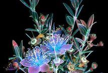 Fluoriserende kleuren in bloemen Criag Burrows