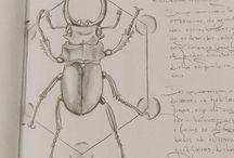 O que tem nos meus papéis / Desenhos, em geral à lápis.