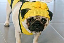 Bumble bee pugs