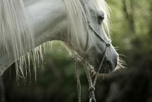 Equine Beauties / Beautiful and Majestic Horses / by Akira Cheyenne Feathermoon