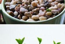 Das Leben beginnt wenn du einen Garten beginnst :)