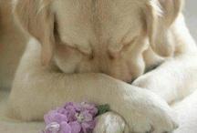 Awww!!    So cute!! / by Sherry Adams