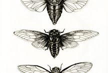 Animales insectos