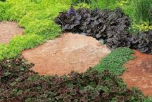 Ground Cover for paths etc