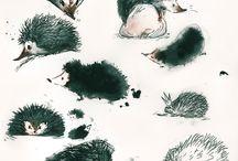 Cutest Hedgehogs