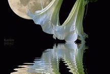 Gifs λουλούδια νύχτα και με φεγγαρι