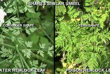 Poisonous Plants UK