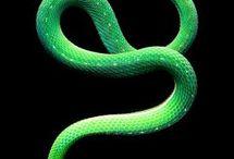 snakes & serpents