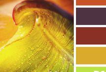 Harmonies de couleurs terre, ocre, orangé