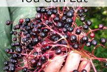 Wild plants you can eat. / by Selena Brown