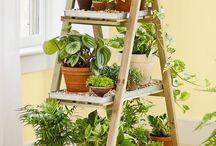 Estandes de plantas