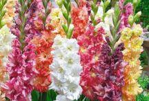 Frühling im Garten / Töpfe, Blumenkästen, Gewächshäuser und eine große Auswahl an Blumen und Bäumen erwarten euch!