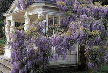 Flawless Flowers, Gardens, & Plants / by Gina Rogers