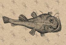 Vintage clipart - Fish Fishing