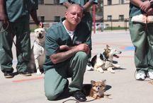 Perros de Terapia y Asistencia / Asistencia, Intervenciones y Terapia Asistida con Perros (TAP)