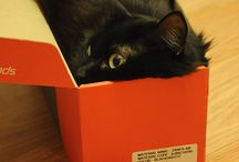 Cats in boxes, what else?!