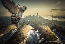 City Pics