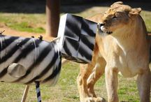 Animal Enrichment