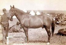 Horses - Show, Costume, Historic