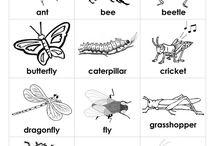 zviřata - hmyz
