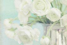 my flowers~