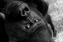 Primates / by Jennifer Maddocks