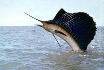 θαλασιες  ζωες